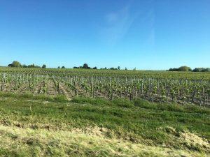 Weinbau Chȃteau Gruaud Larose